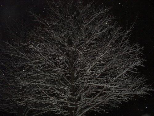 snowbranch.jpg