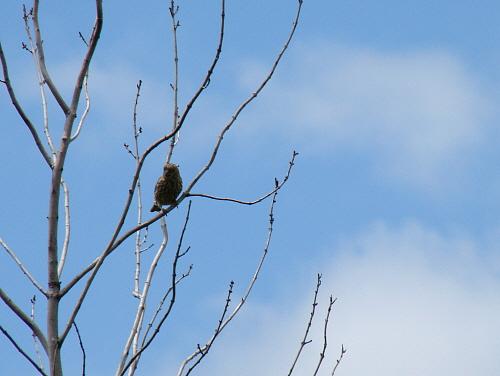 solobird.jpg