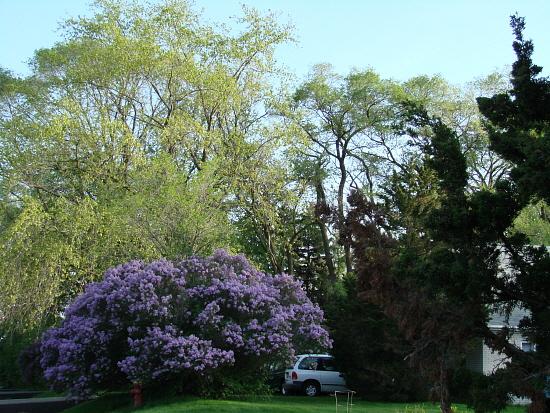 springcolor.jpg
